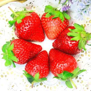 苗栗大湖香水草莓 (1號果)  20~24粒/600g/盒