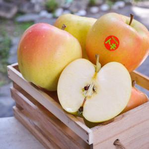 日本青森土歧蘋果6粒/1.9kg/盒