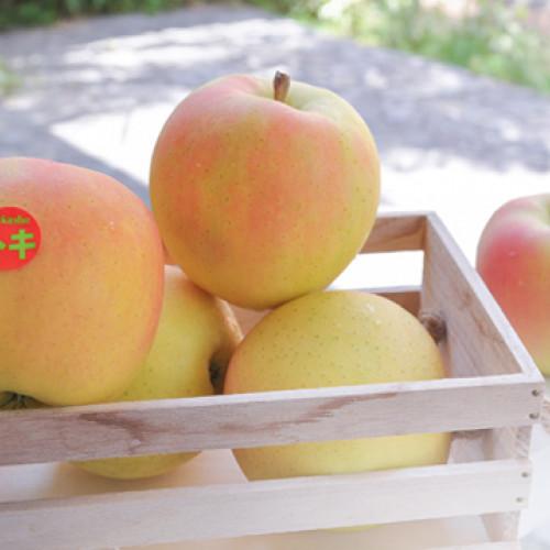 日本青森土歧蘋果16粒/5kg/盒