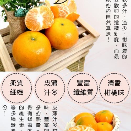 台中東勢特大茂谷柑 (27A) 10台斤/件