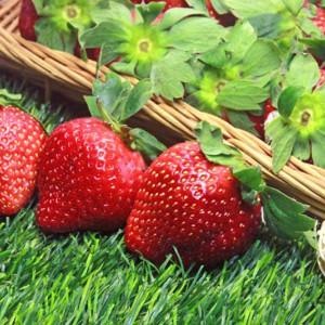 苗栗大湖豐香草莓(1號果)約70粒/2.5台斤/盒