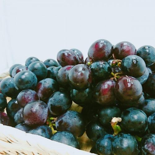 南非無籽黑葡萄2.5kg/盒